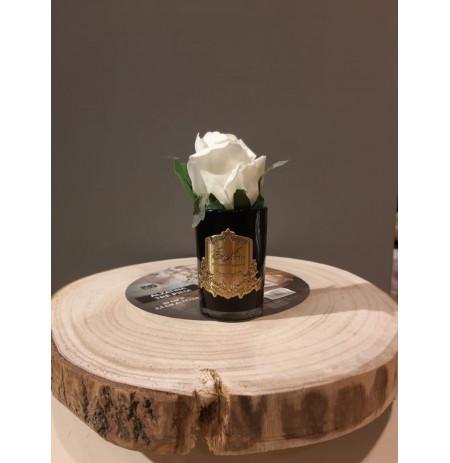 Trendafil dekorues me arome - White